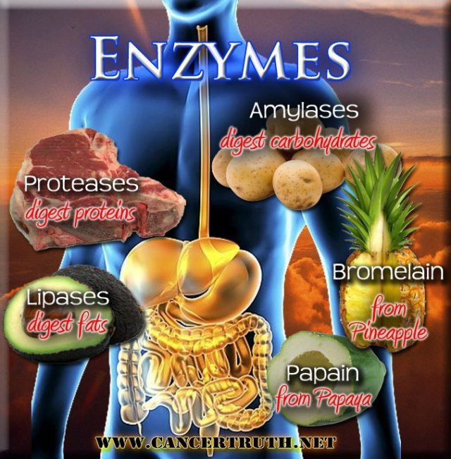 Enzymes ..
